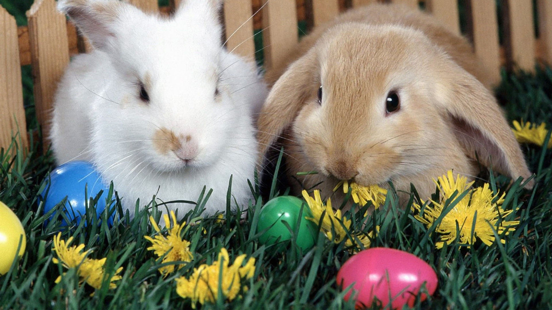 Easter Bunny 2013 Pictures Background HD Wallpaper